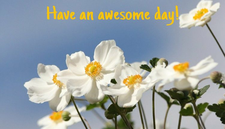 good-morning-thursday-have-an-awesome-day