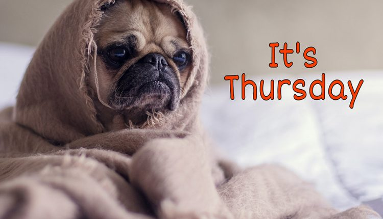 good-morning-thursday-with-funny-dog