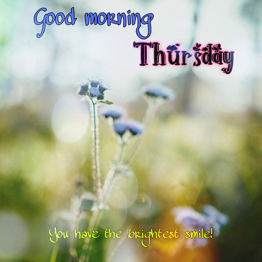 Good morning thursday image with white flowers