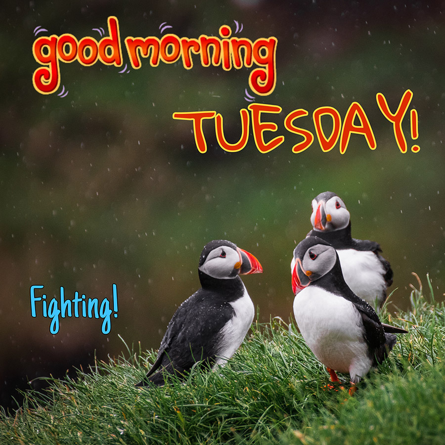 Good morning tuesday image with 3 birds