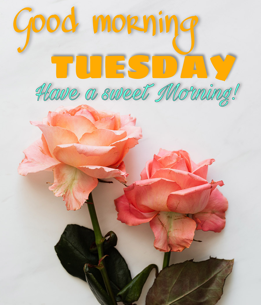 Good morning tuesday image with 2 roses