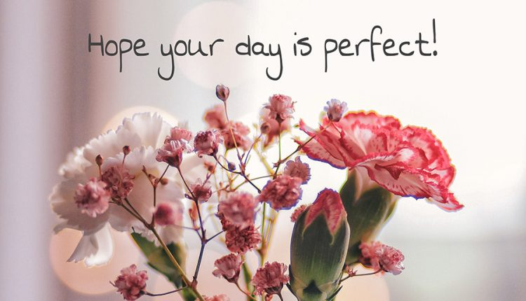 good-morning-tuesday-hope-your-day-is-perfect