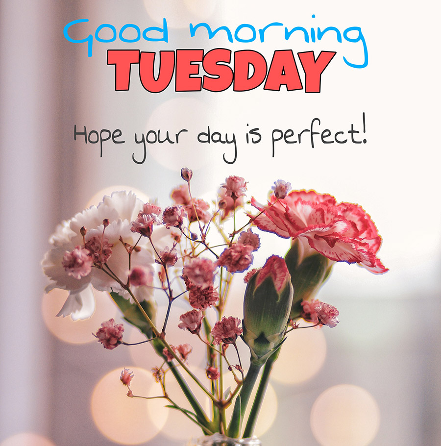 Good morning tuesday image with carnation flowers
