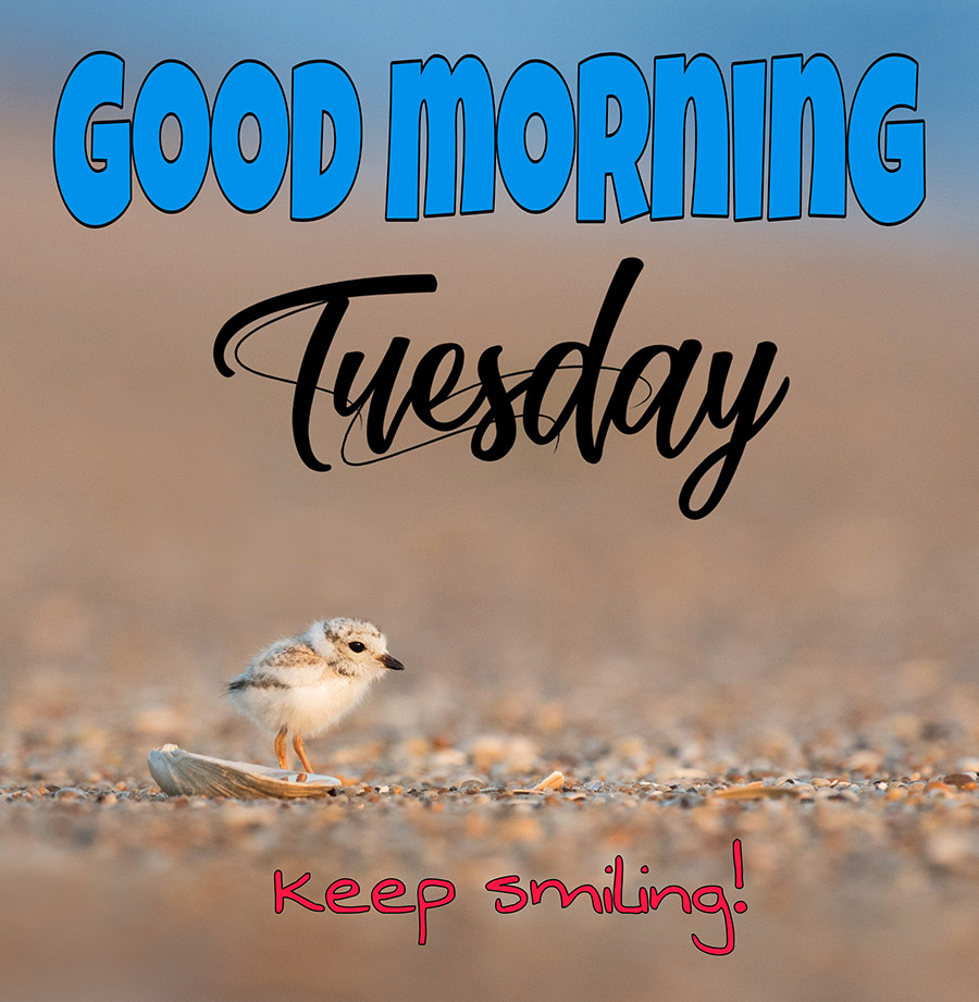 Good morning tuesday image with a baby bird