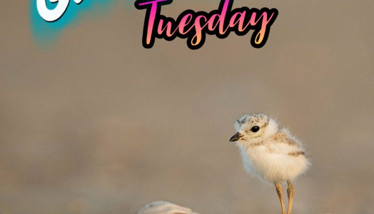 good-morning-tuesday-with-baby-bird