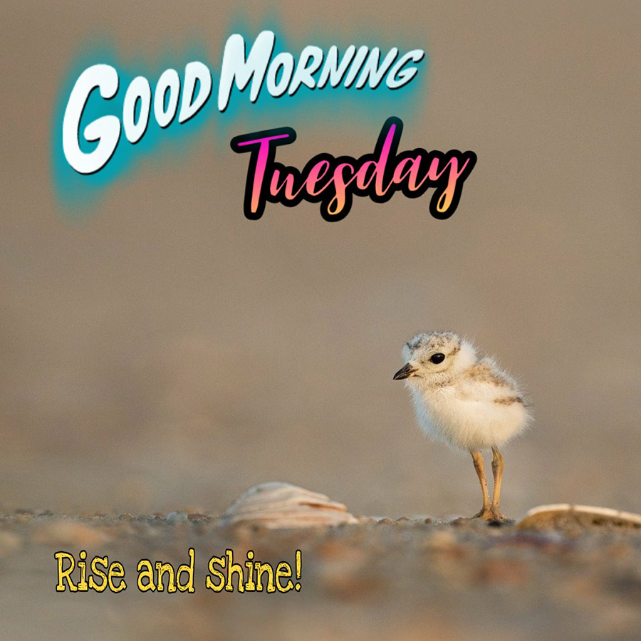 Good morning tuesday image with cute bird