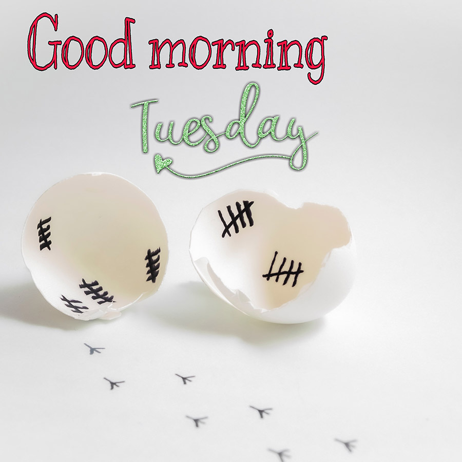 Good morning tuesday image with eggshell
