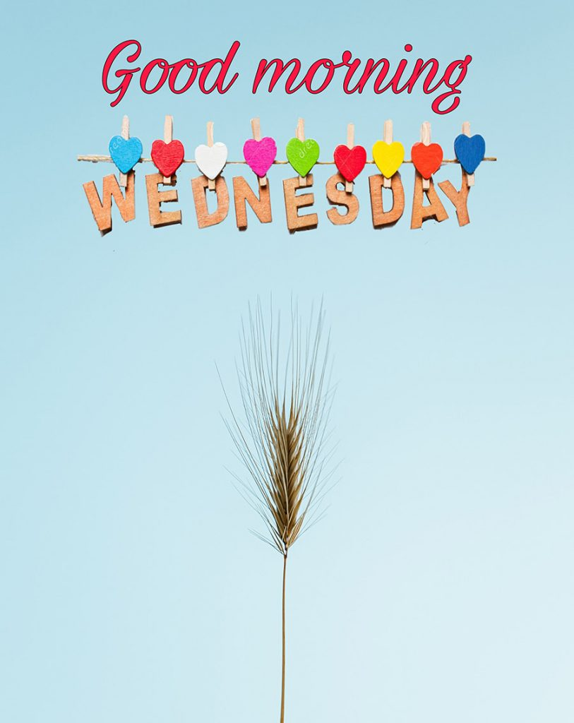 Good morning Wednesday Image with wheat
