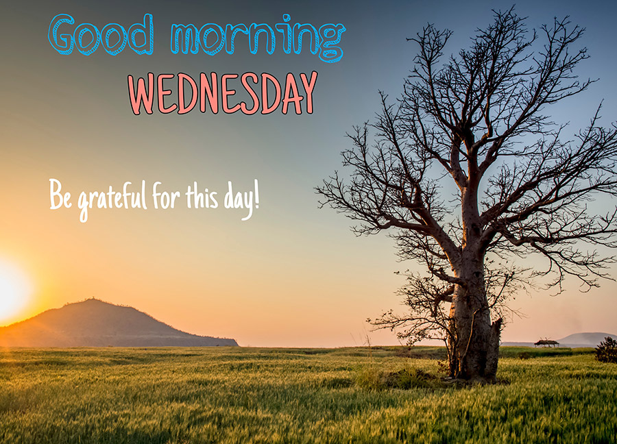 Good morning wednesday image with tree and fields