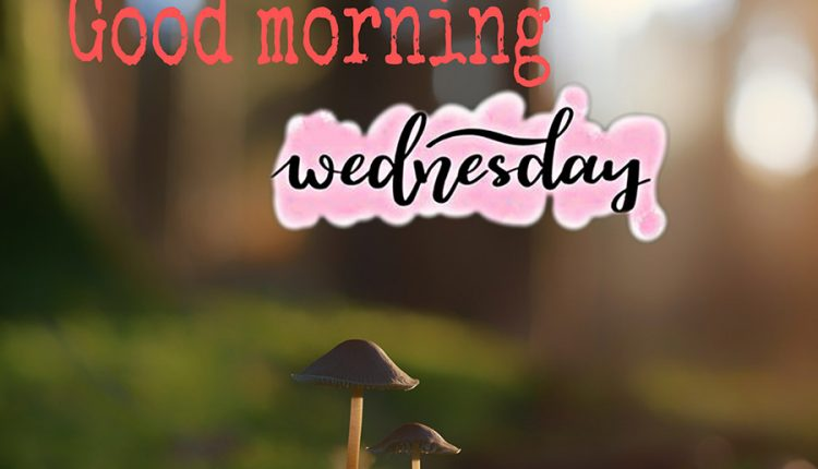 good-morning-wednesday-hope-all-is-well