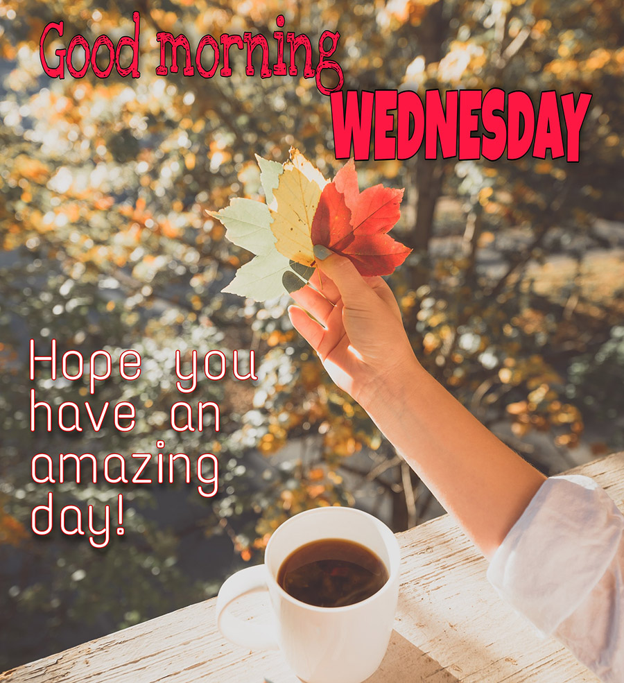 Good morning wednesday image with coffee cup and maple leaves