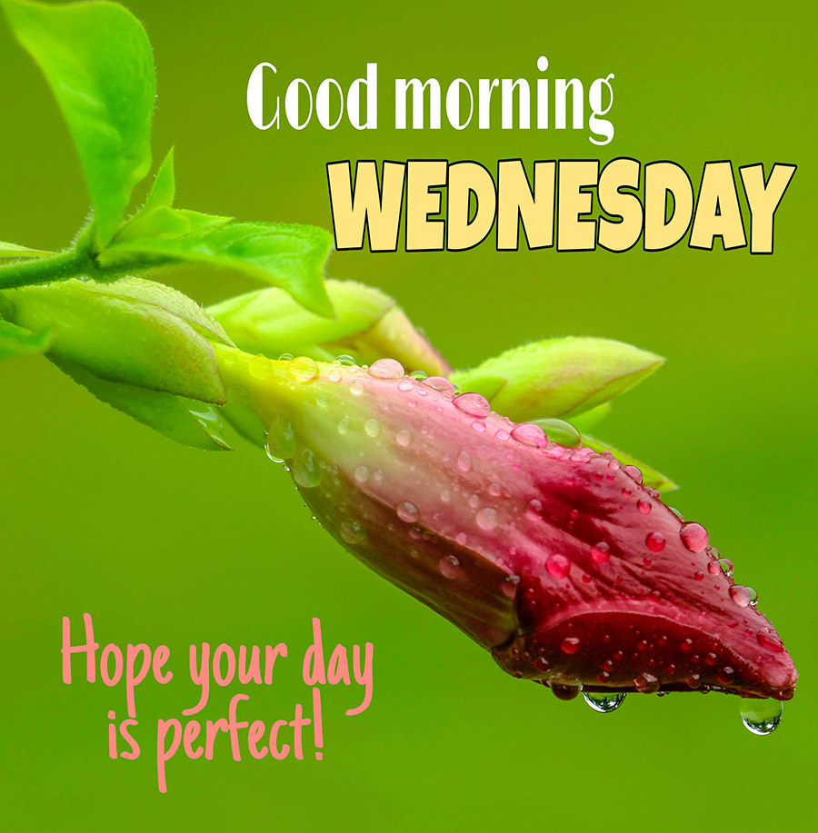 Good morning wednesday image with red flowers are about to bloom