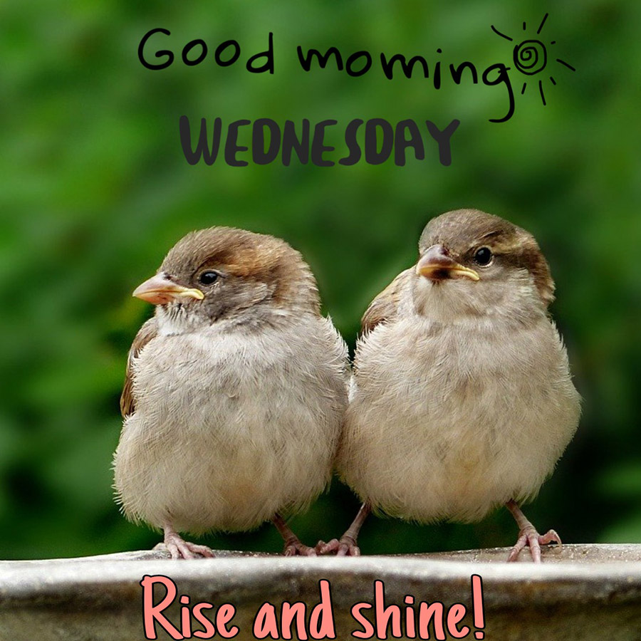 Good morning wednesday image with sparrows