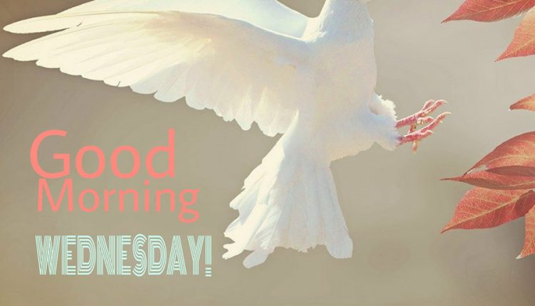 good-morning-wednesday-what-a-pleasant-morning-we-are-having