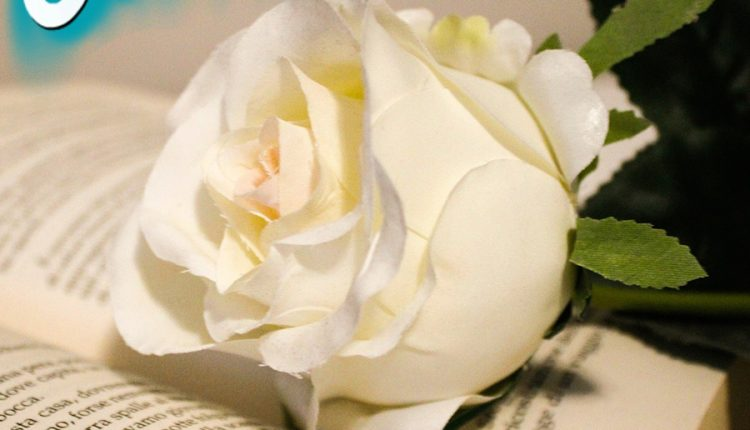 good-morning-white-rose-and-the-book