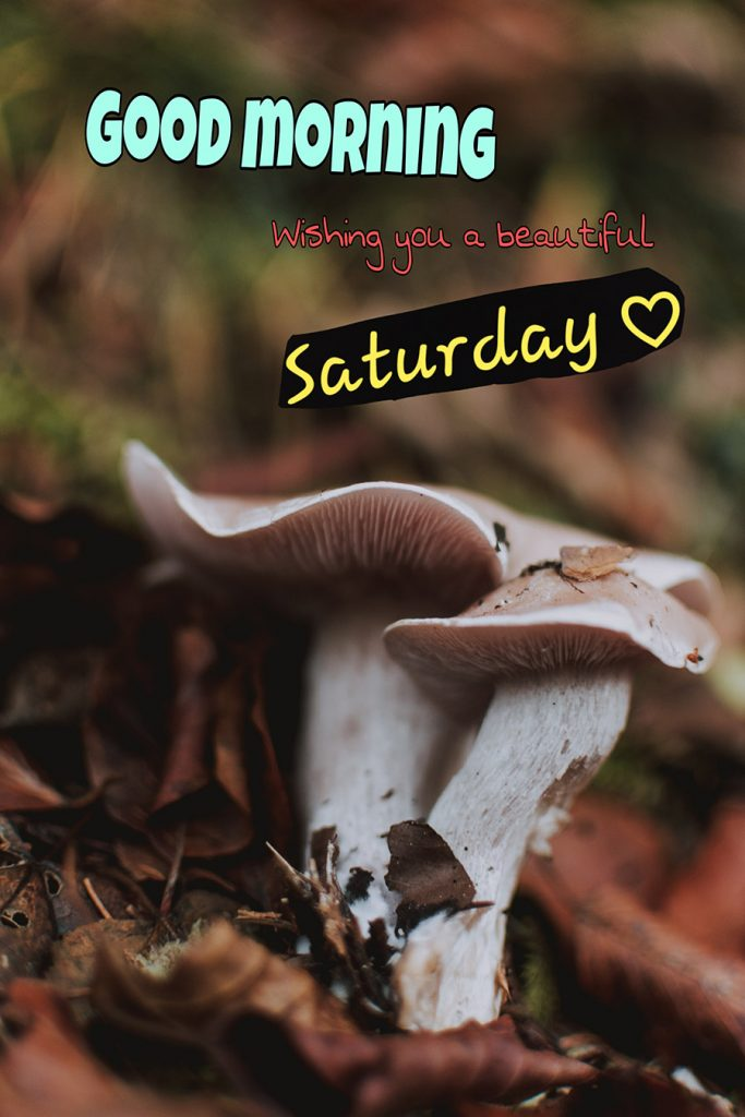 Good morning saturday image with mushrooms, dried leaves