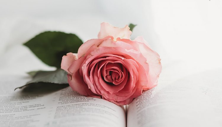good-morning-with-rose-and-bok