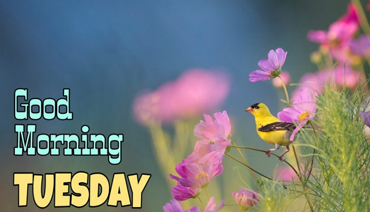 have-a-beautiful-day-good-morning-tuesday