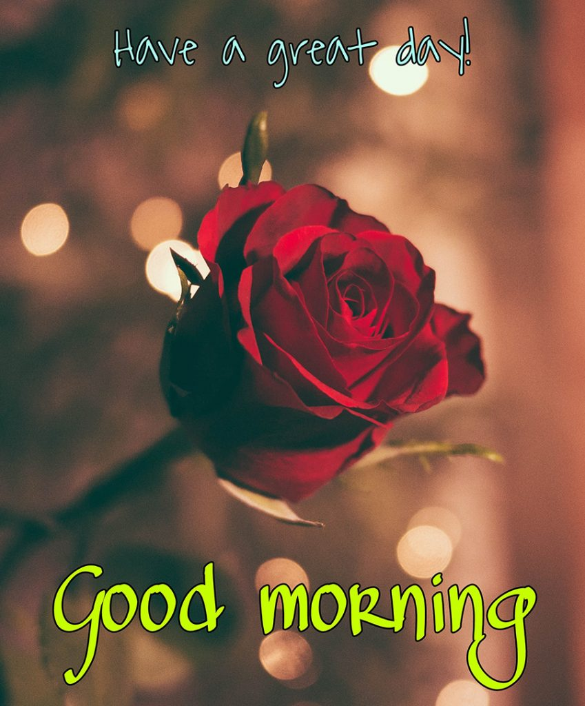 Have a great day good morning image with red rose