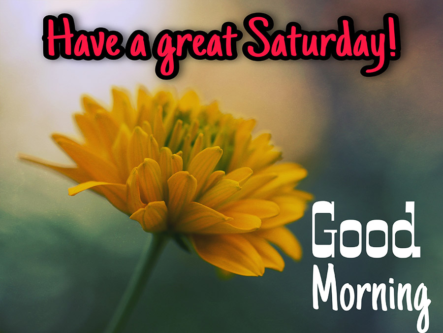 Good morning saturday image with yellow flower