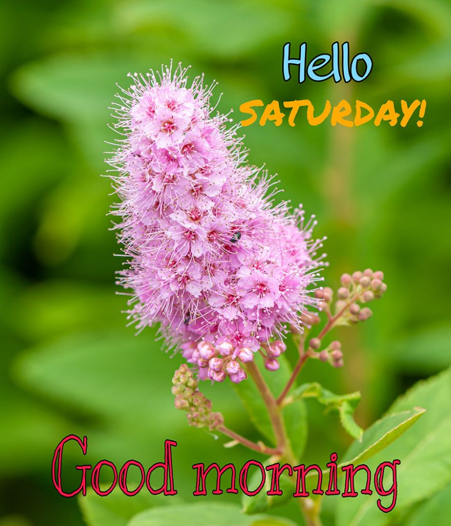 Good morning saturday image with pink flowers