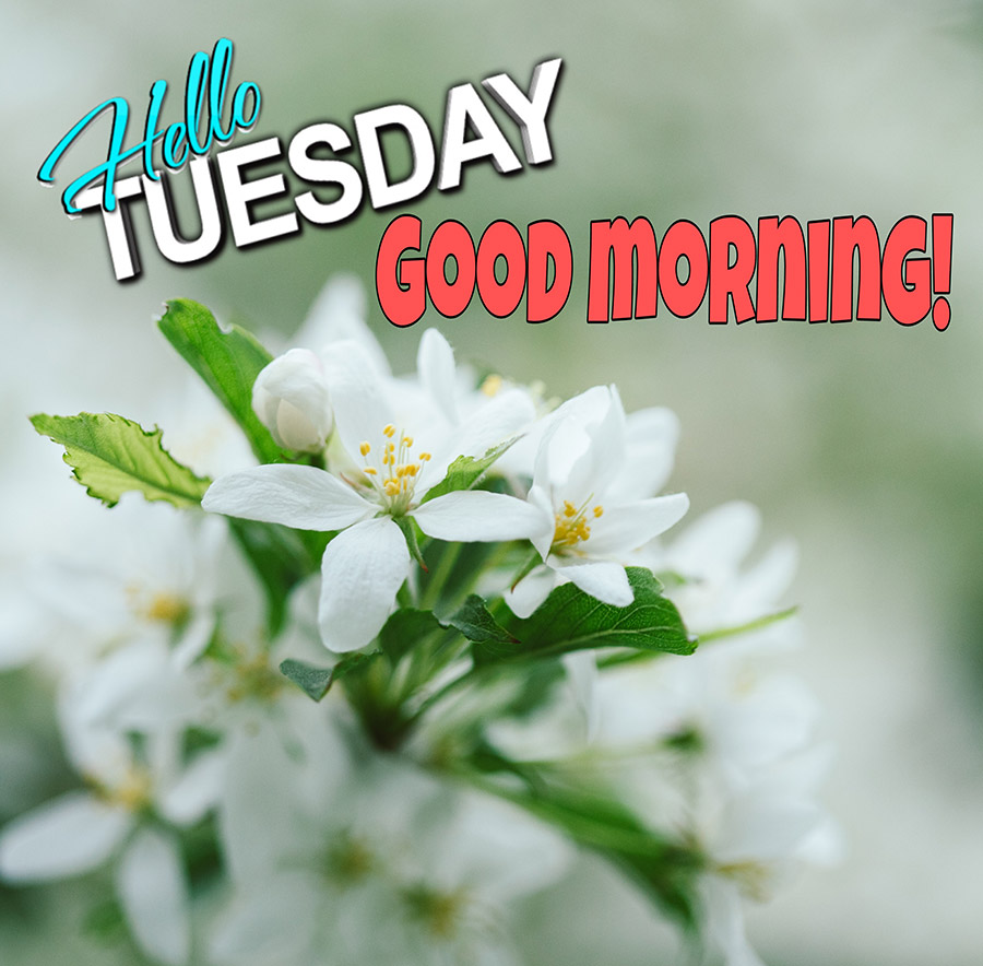 Good morning tuesday image with white flowers