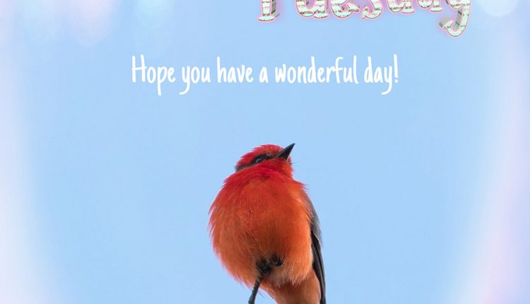 hope-you-have-a-wonderful-day