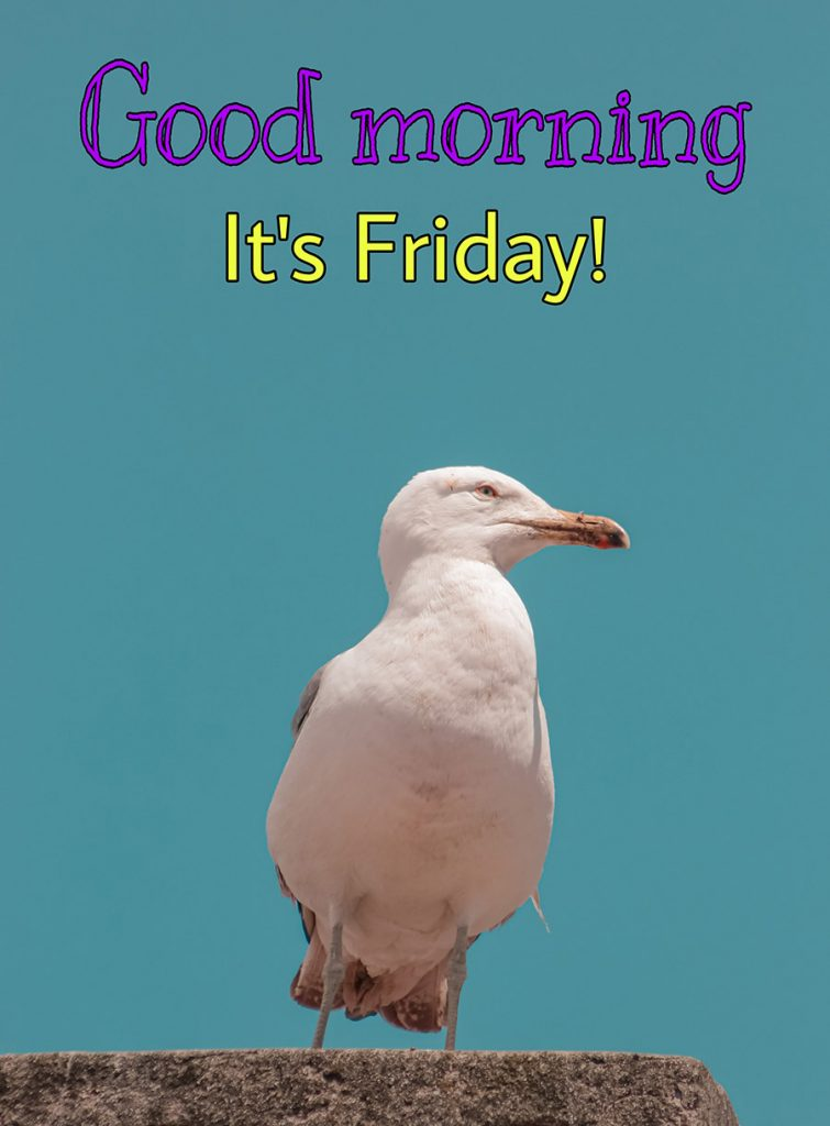 Good morning friday image with the seagull is perched