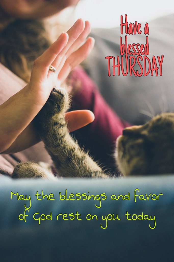 Good morning thursday image with cat