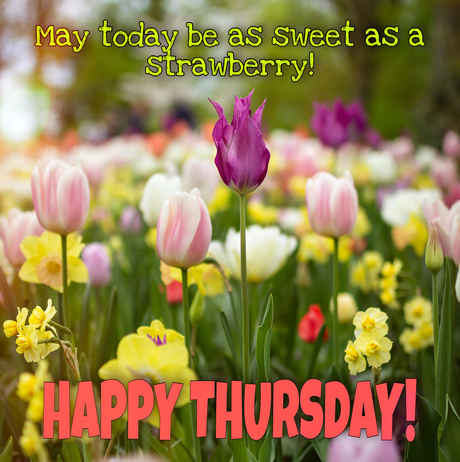 Good morning thursday image with tulips