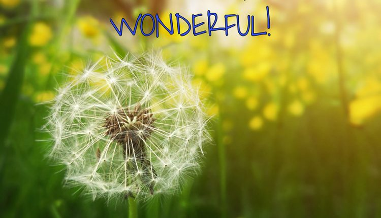 may-you-tuesday-be-simply-wonderful