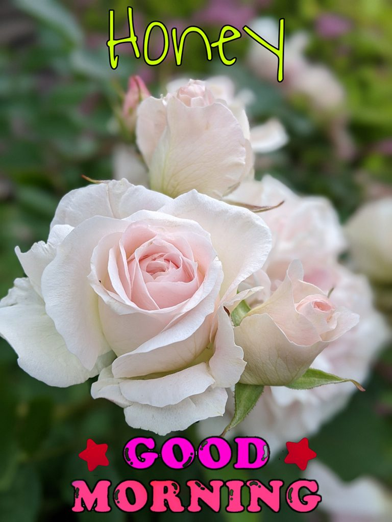 Good morning honey with white and pink roses