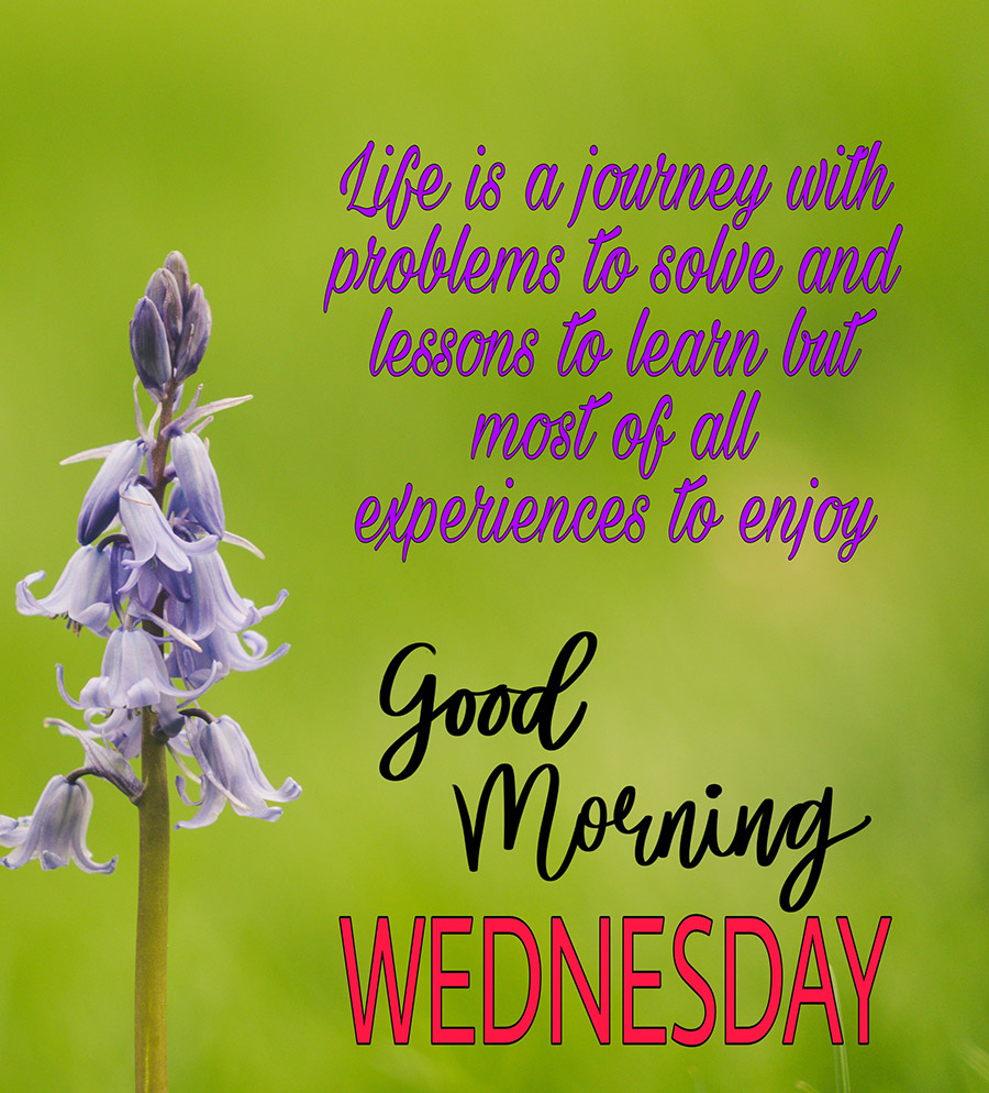 Good morning wednesday image with purple flowers and green background
