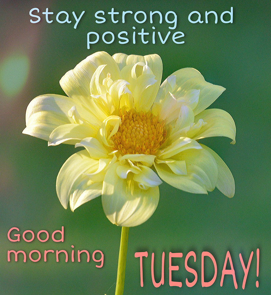 stay-strong-and-positive-good-morning-tuesday