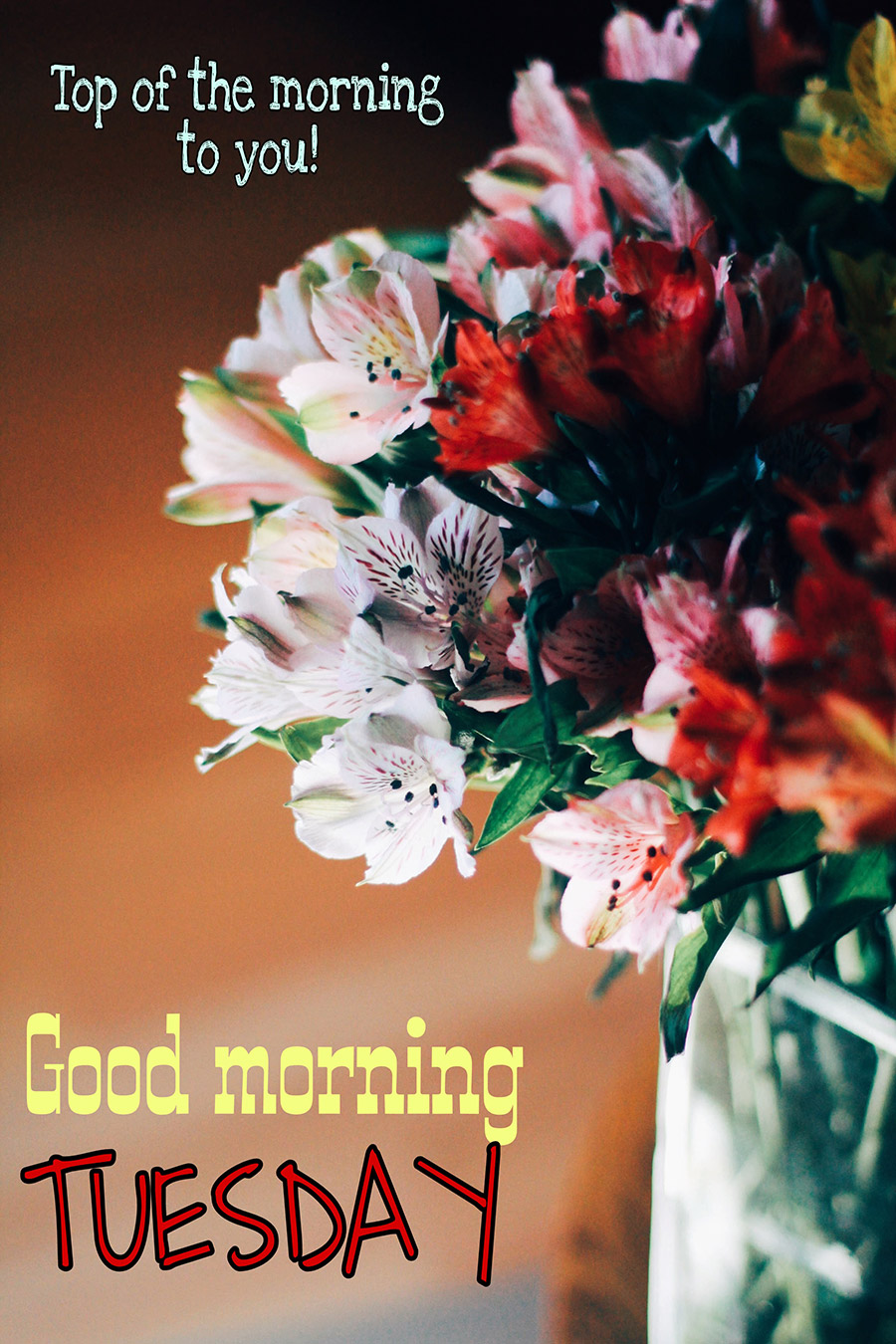 Good morning tuesday image with colorful flowers