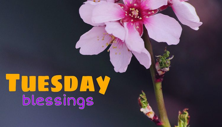 tuesday-blessings-good-morning