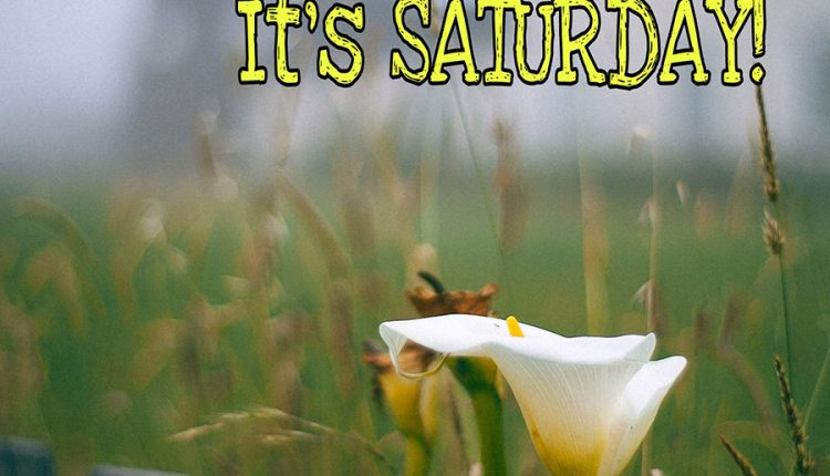 wake-up-and-live-your-life-its-saturday