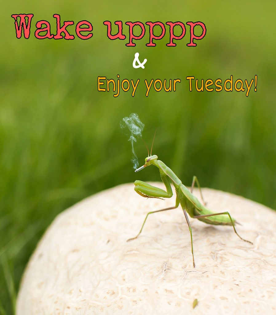 Good morning tuesday image with the mantis is smoking