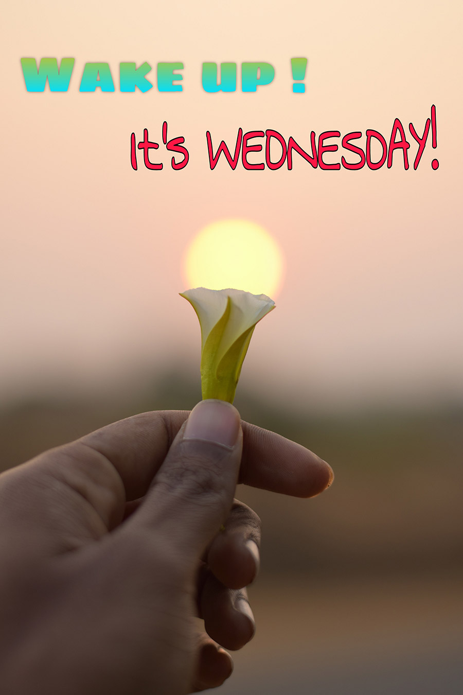 Good morning wednesday image with flower àn the sun