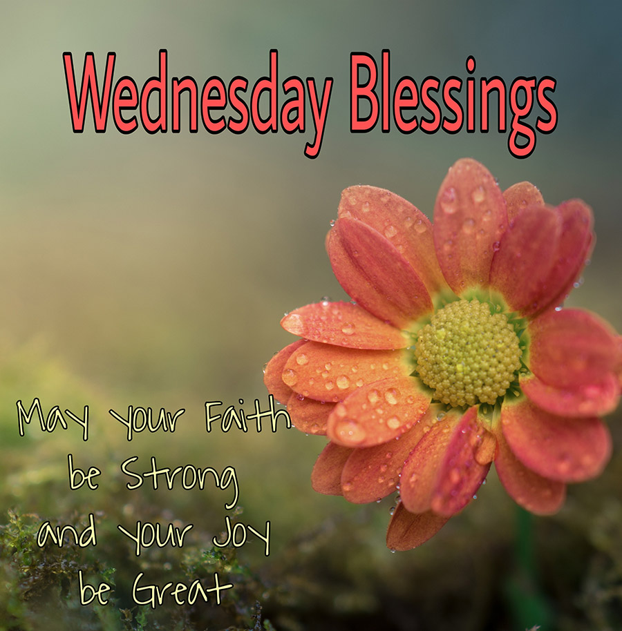Good morning wednesday image with flower