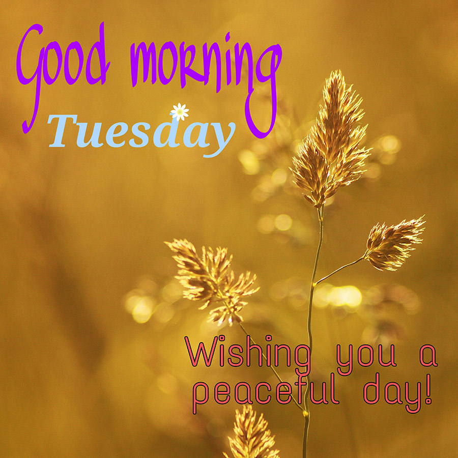 Good morning tuesday image with flowers and gold sunshine