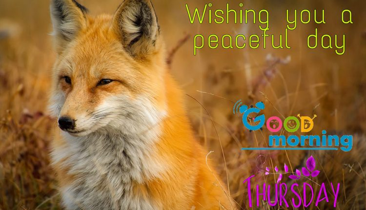 wishing-you-a-peaceful-thursday
