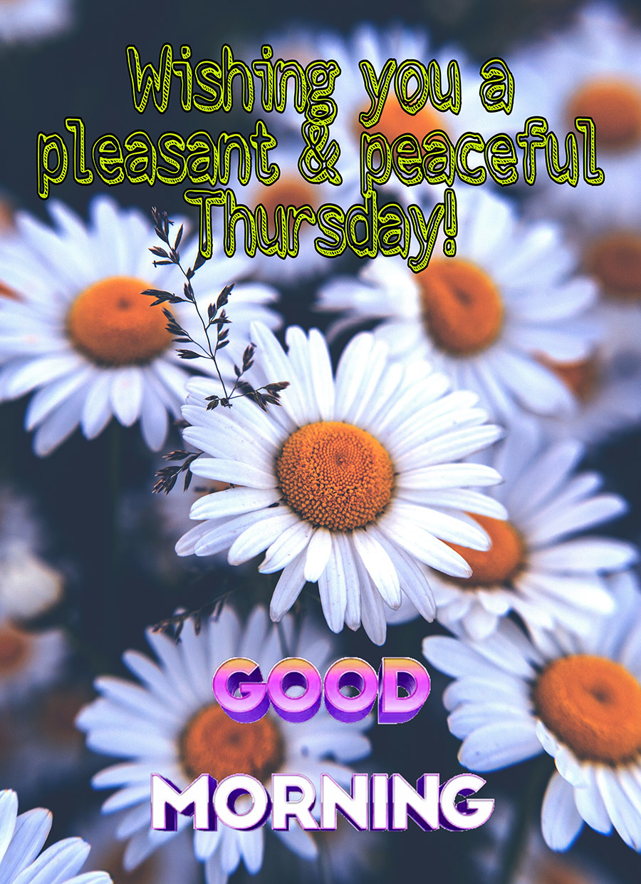 Good morning thursday image with daisys