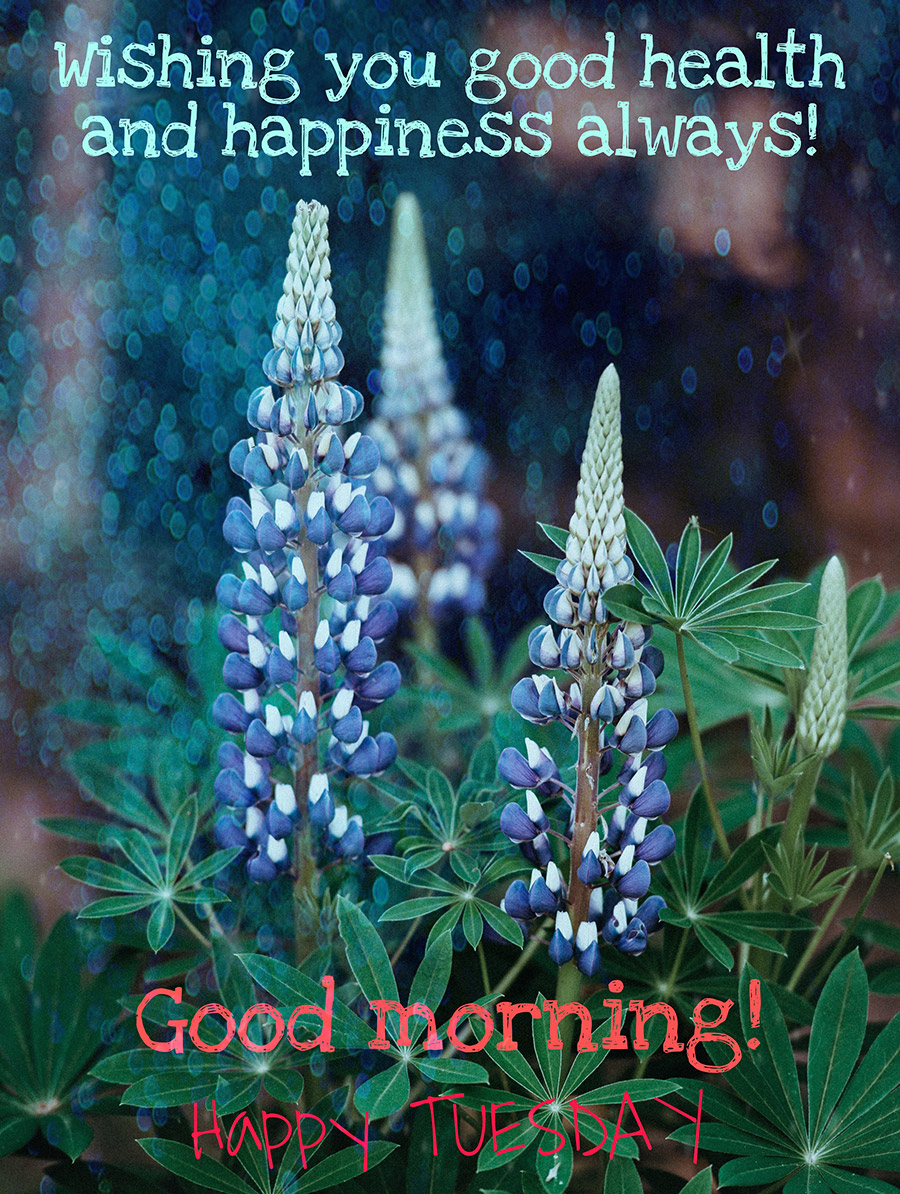 Good morning tuesday image with blue flowers