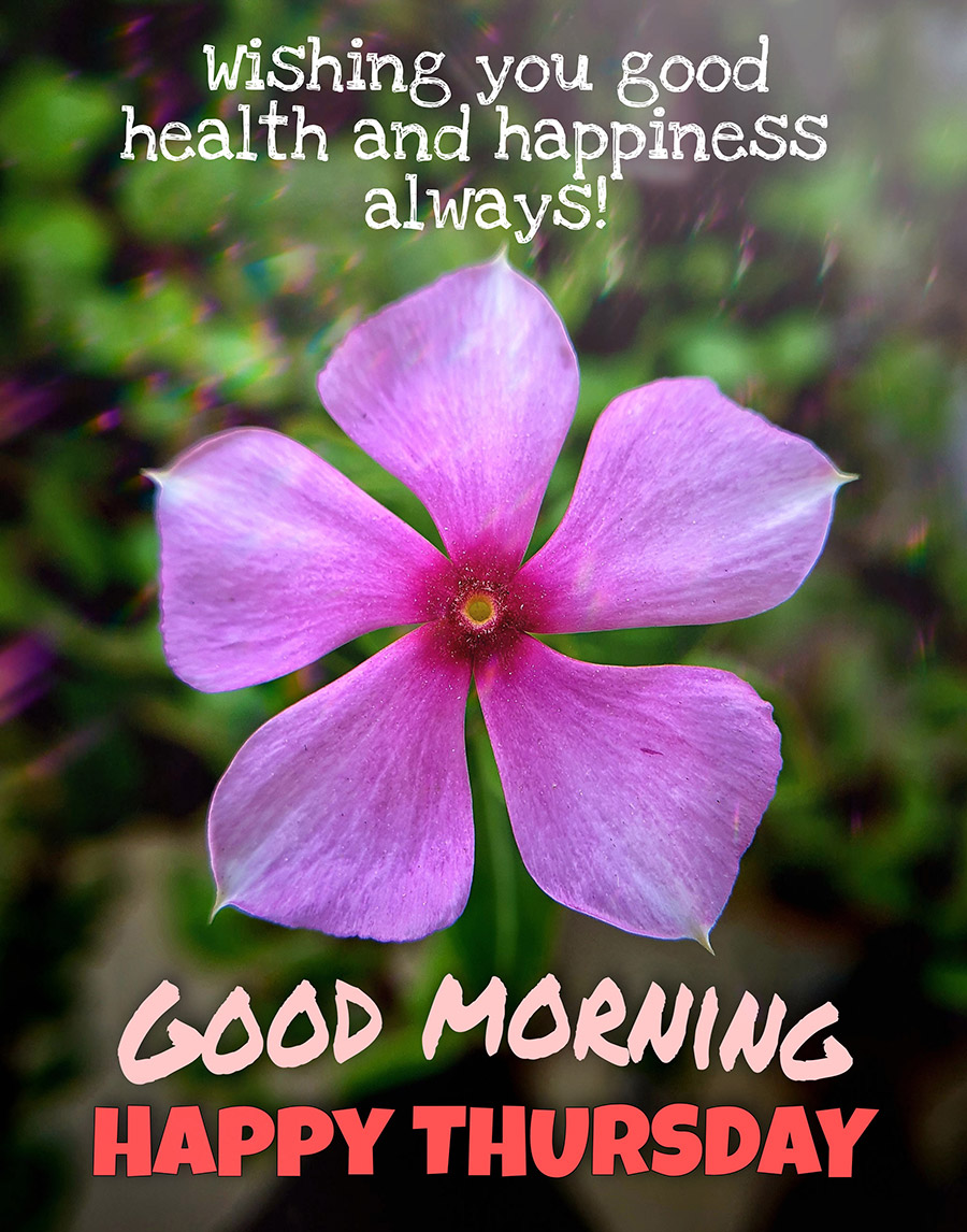 Good morning thursday image with purple flower