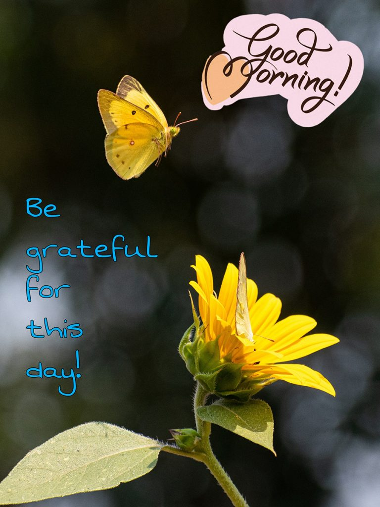 Good morning picture with yellow butterfly and yellow flower