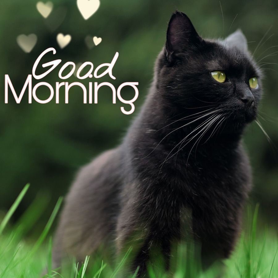 Good morning image with black cat