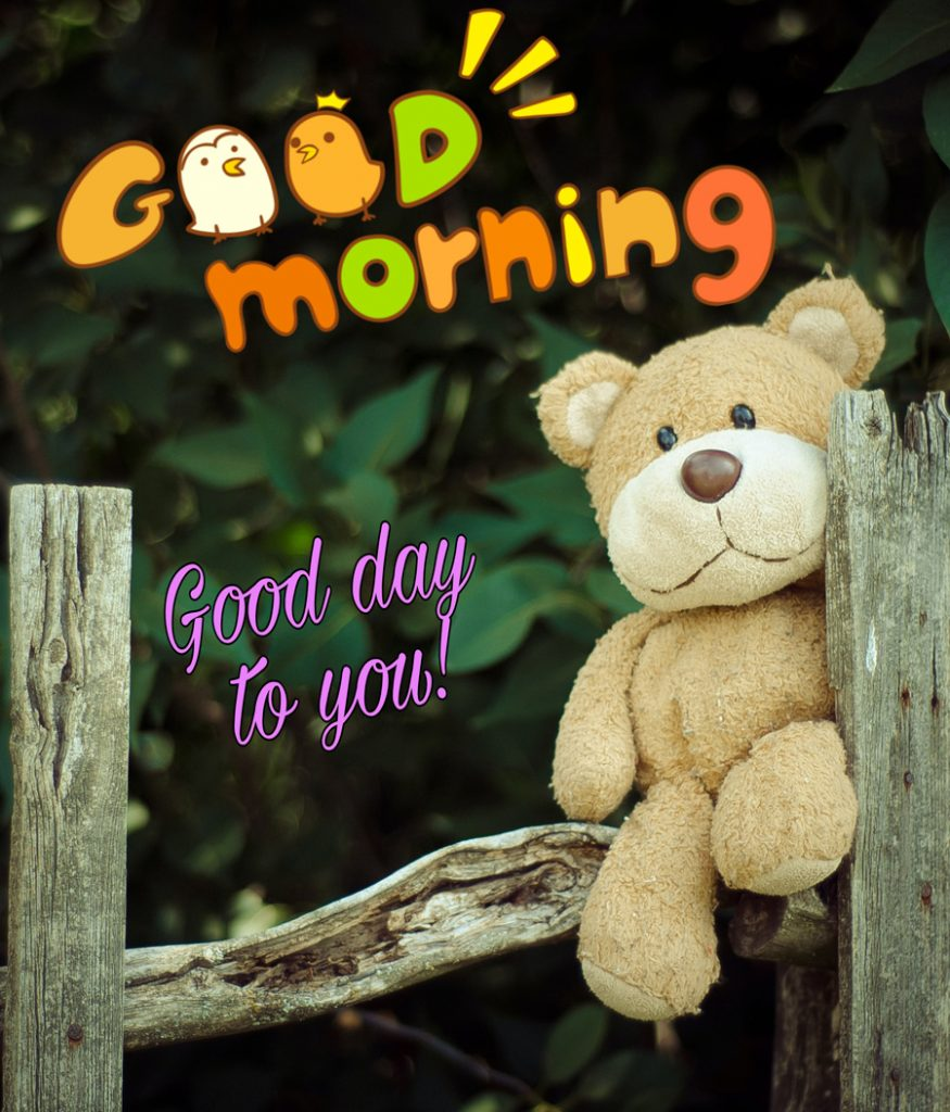 Good morning image with  teddy bear sitting on the fence