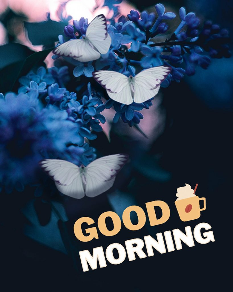 Good morning photo with white butterfly