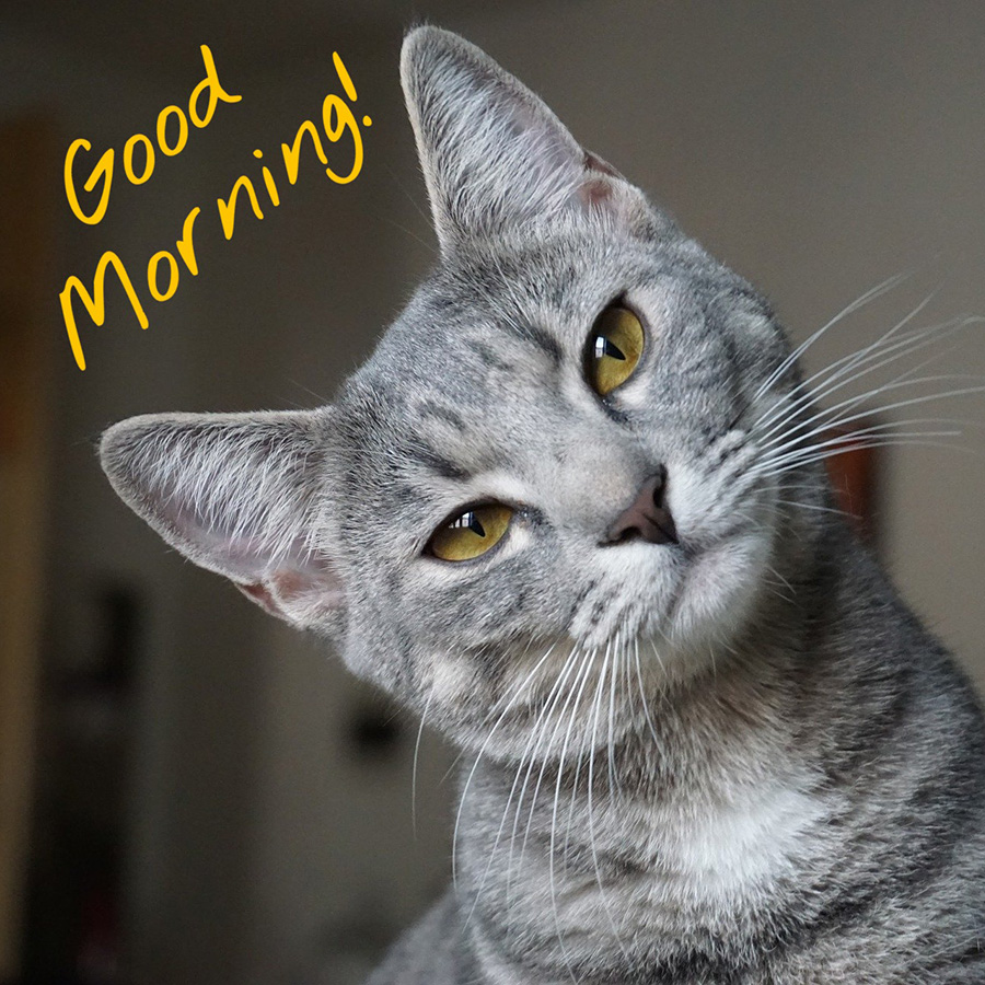Good morning image with gray cat